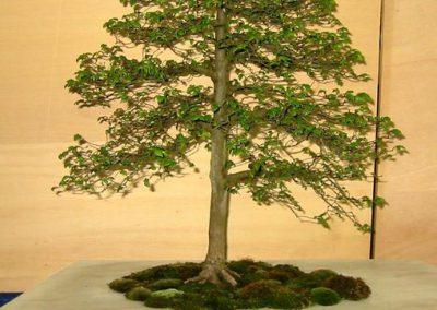 Bonsai Ausstellung Orscholz